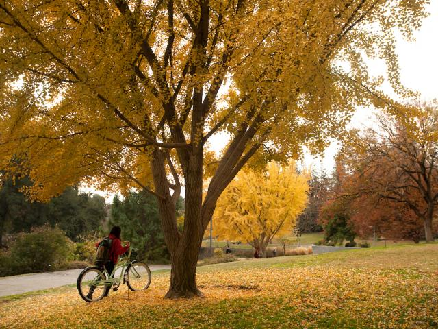 riding a bicycle through fall leaves