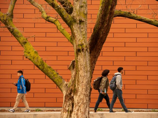Students walking near tree and building