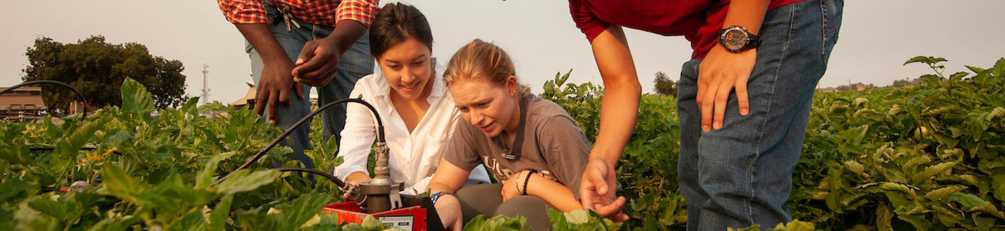 Professor and students researching irrigation